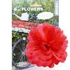 Basil Flower Peony til styr og stel rød